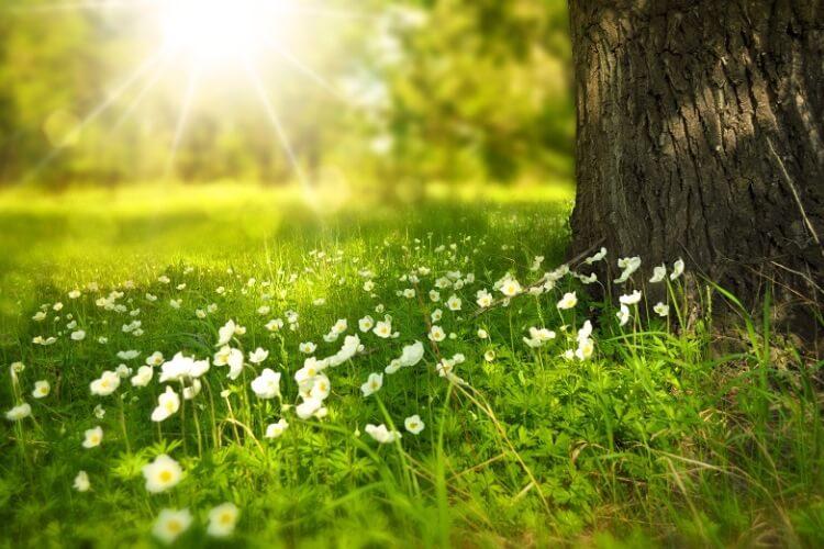Frühling Ostern erleben